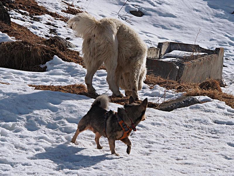 Post-it: le chien agressif / réactif - Page 6 1510