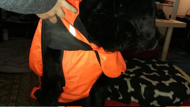 Froid: lui faire porter un manteau ou pas? - Page 21 20190214