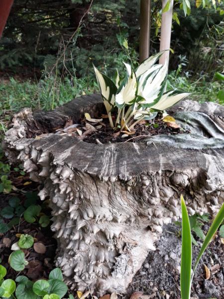 Première saison 2020 au jardin de Flora 20191015