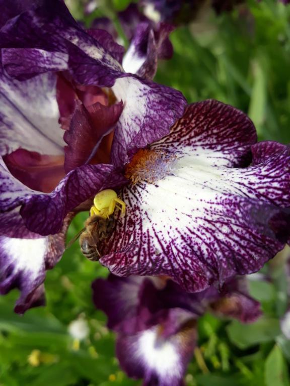 """Déficoncours """"Les insectes sur les plantes"""" - les participations 20200959"""