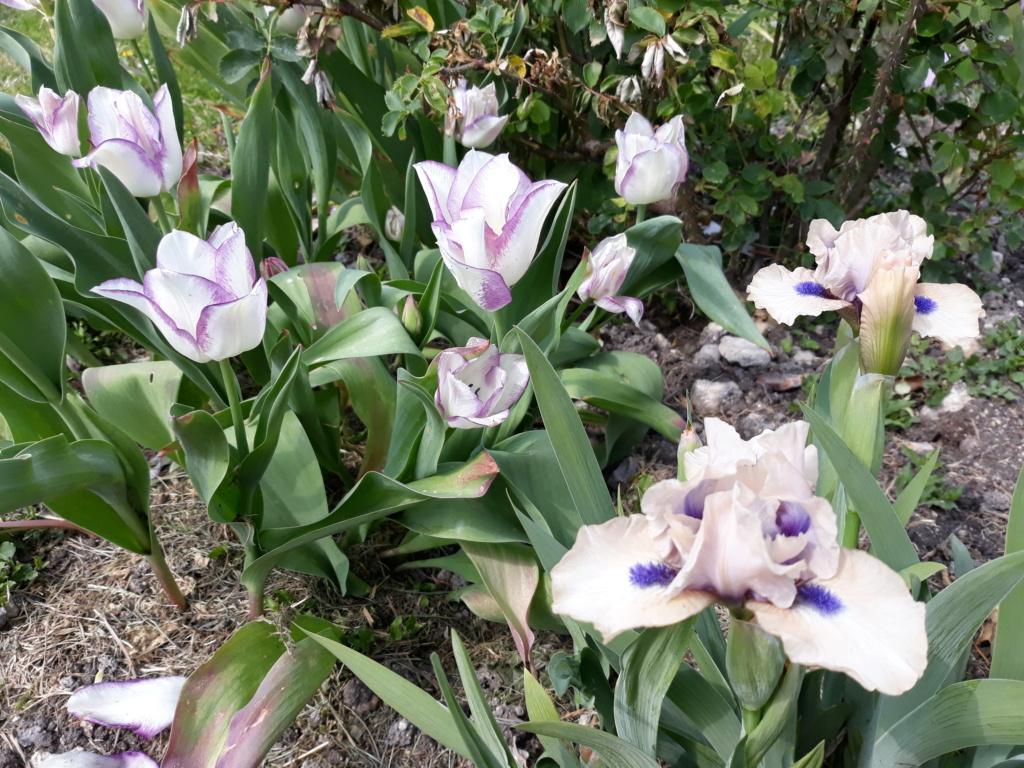 Floraison d'iris de 2017 ....... à 2021 - Page 22 20210472