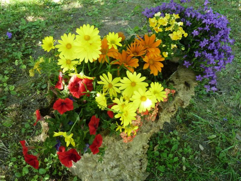 Première saison 2020 au jardin de Flora P1290611