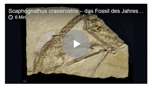 SWR 2, radio culturelle allemande - Page 23 Fossil11
