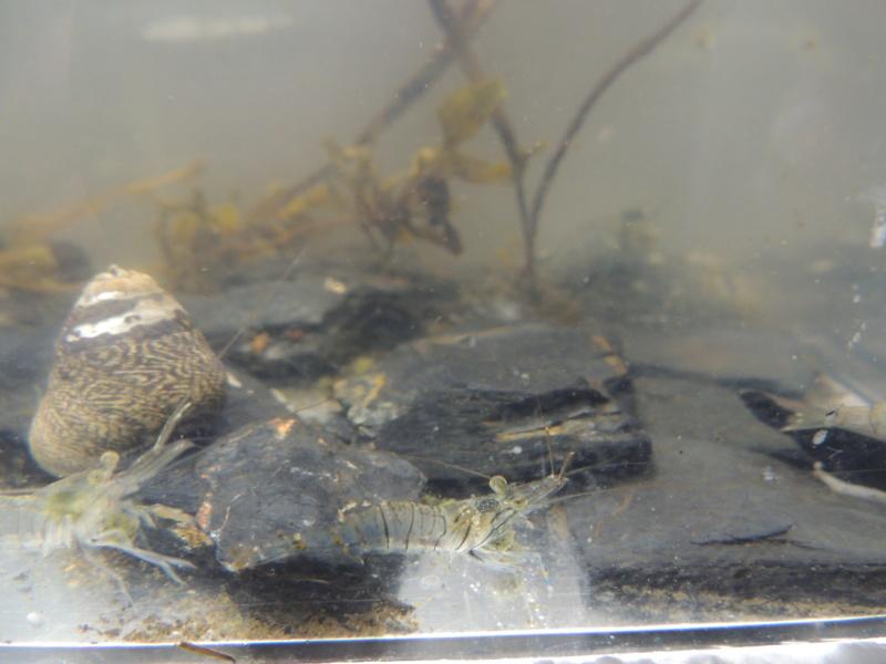 Bac eau de mer avec des crevettes locales Dscn8215