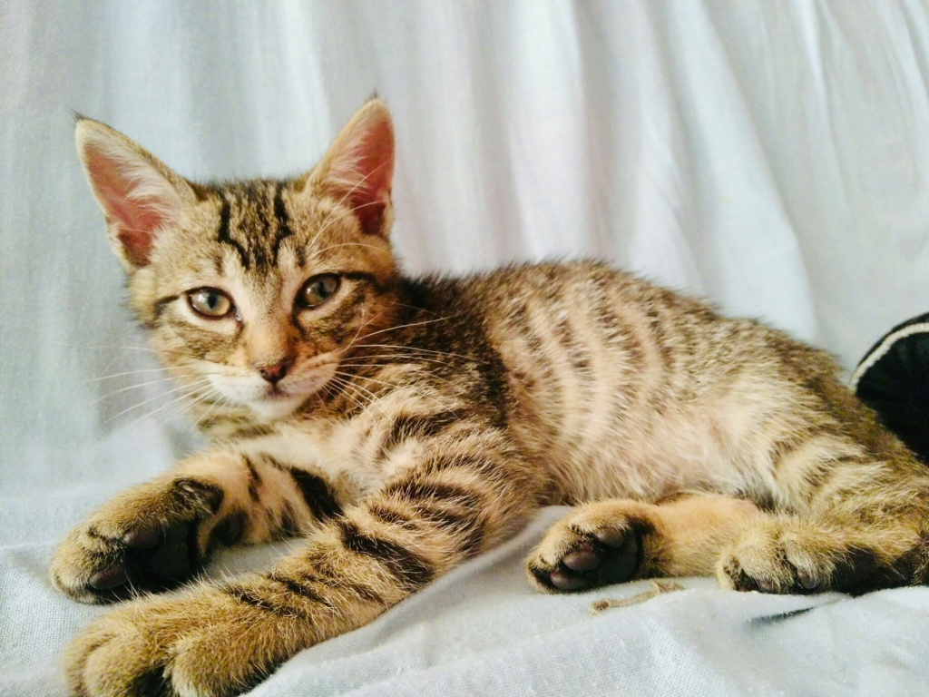 lince - LINCE (PIRATE 4 adopté) 98dda210