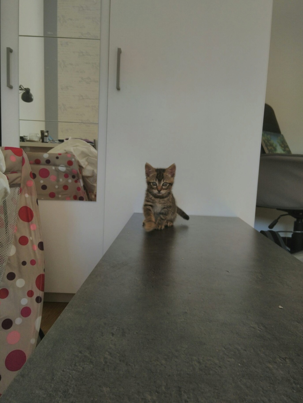 lince - LINCE (PIRATE 4 adopté) B3bb2310