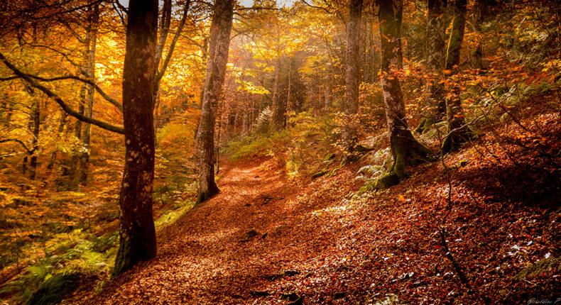 Belles images d'automne  15433010