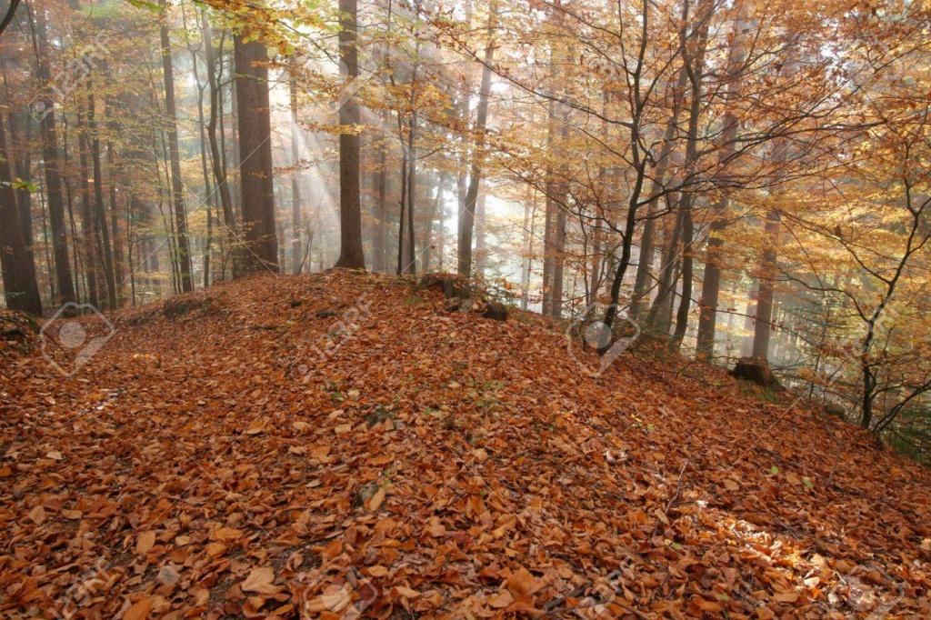 Belles images d'automne  23196010