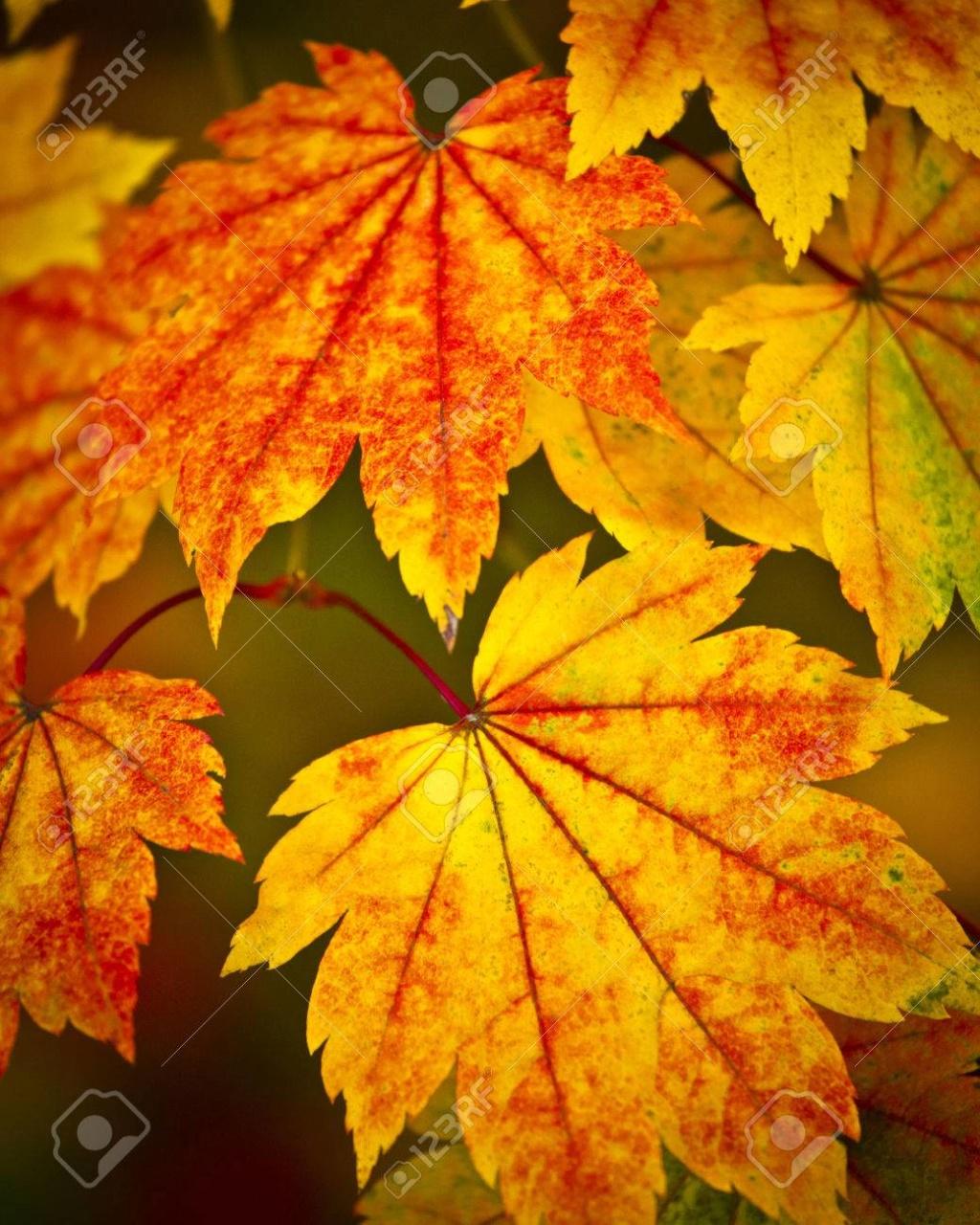 Belles images d'automne  29780010