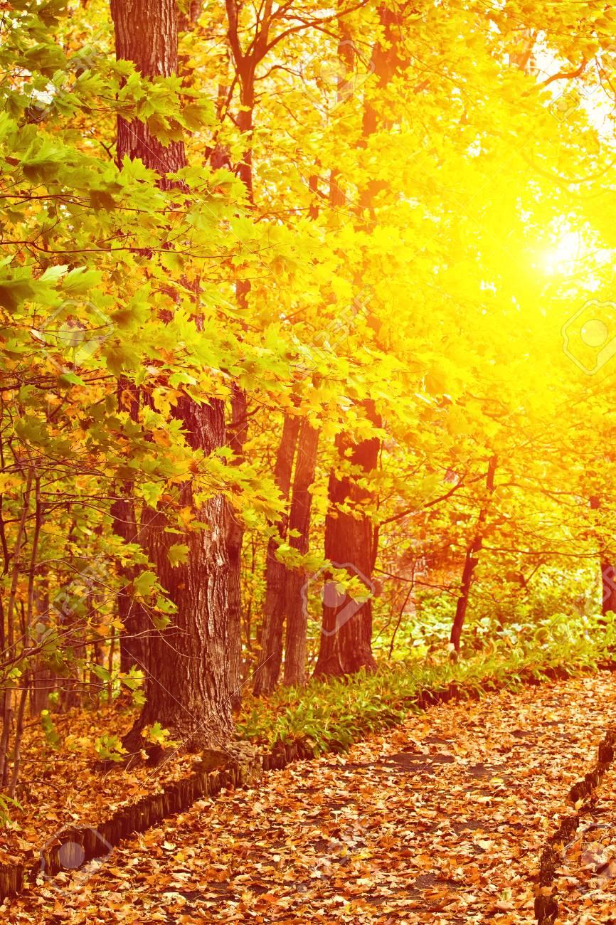 Belles images d'automne  30940610
