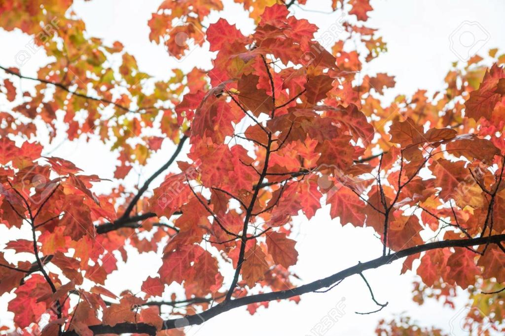 Belles images d'automne  37962810