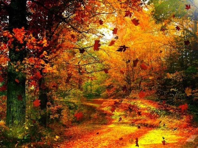 Belles images d'automne  52093810