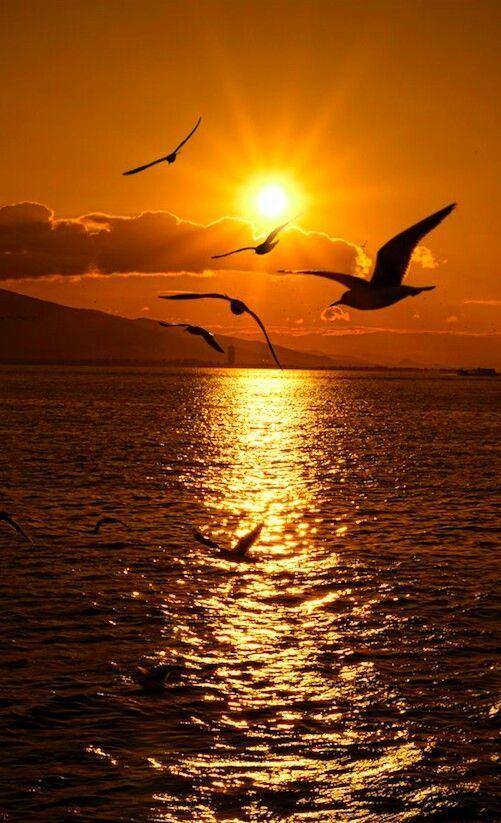 Belles images trouvées sur Pinterest  98f88610
