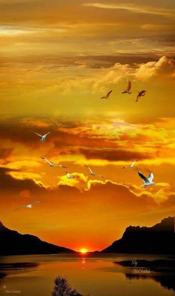 Belles images trouvées sur Pinterest  - Page 2 F68f2d10