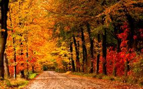Belles images d'automne  Images11