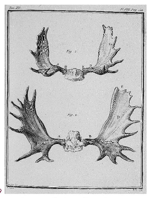 La chasse sous l'Ancien Régime - Page 3 236