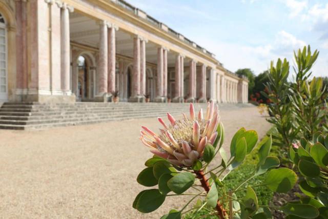 Le Parterre Africain du Grand Trianon Ikryji10