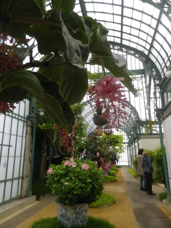 Belgique :  les Serres royales de Laeken Imgp0855