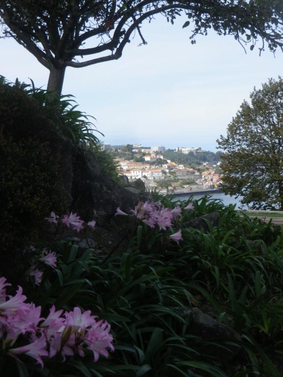 Bons baisers du Portugal !  Imgp1376