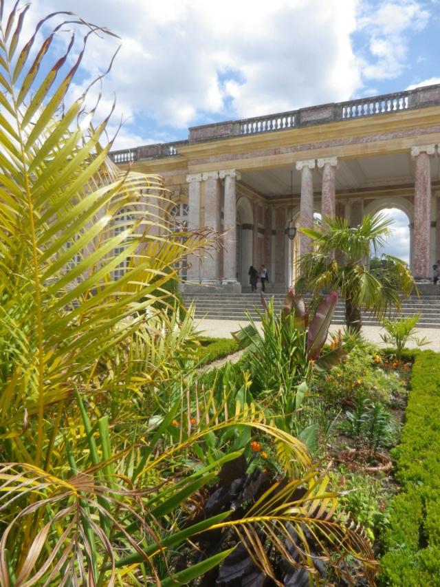 Le Parterre Africain du Grand Trianon Imgp1890