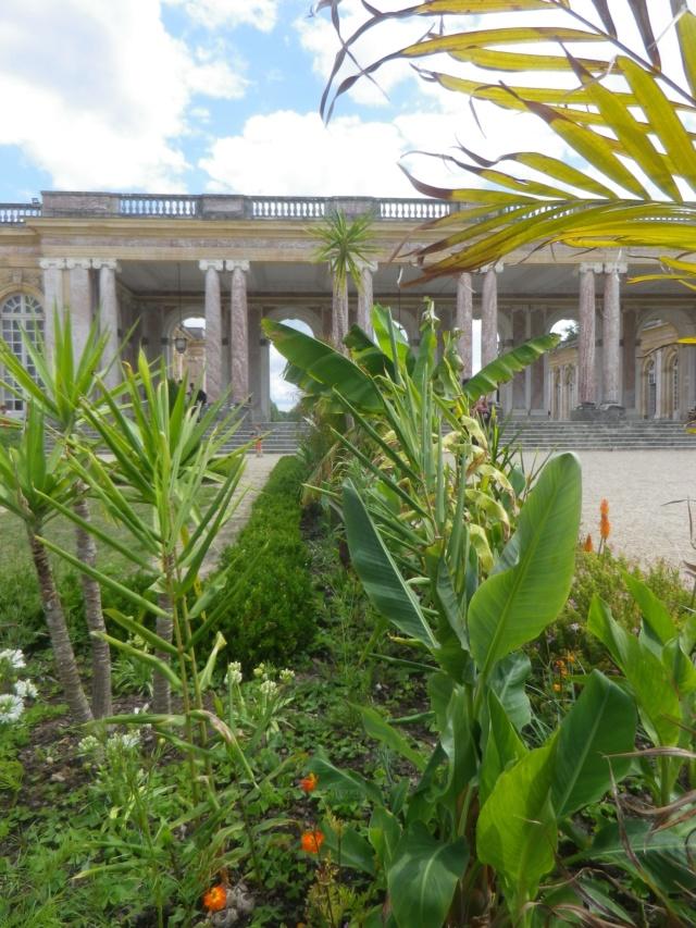 Le Parterre Africain du Grand Trianon Imgp1891