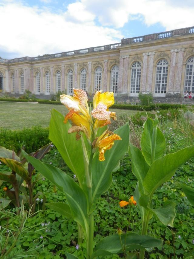 Le Parterre Africain du Grand Trianon Imgp1894