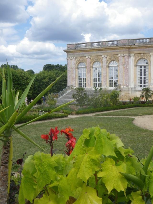 Le Parterre Africain du Grand Trianon Imgp1896