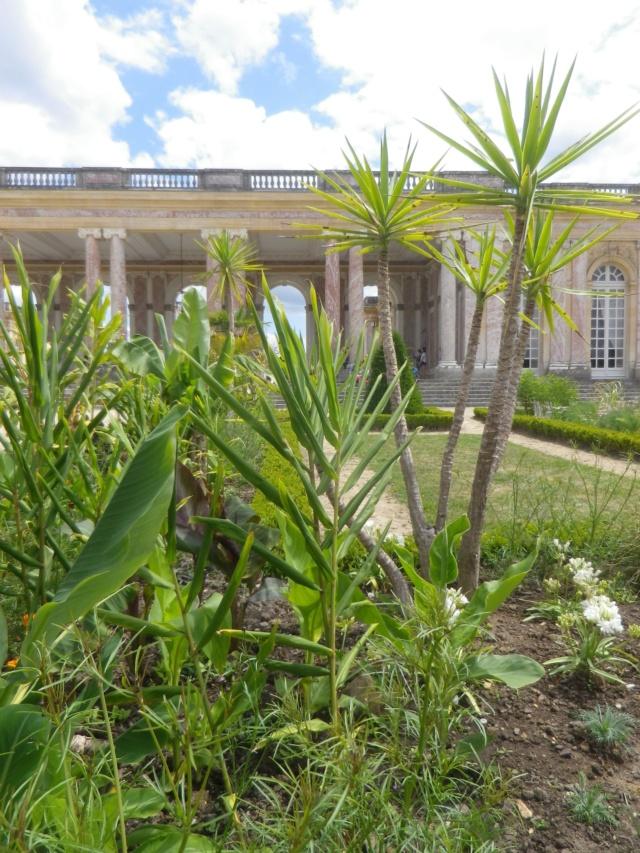Le Parterre Africain du Grand Trianon Imgp1898