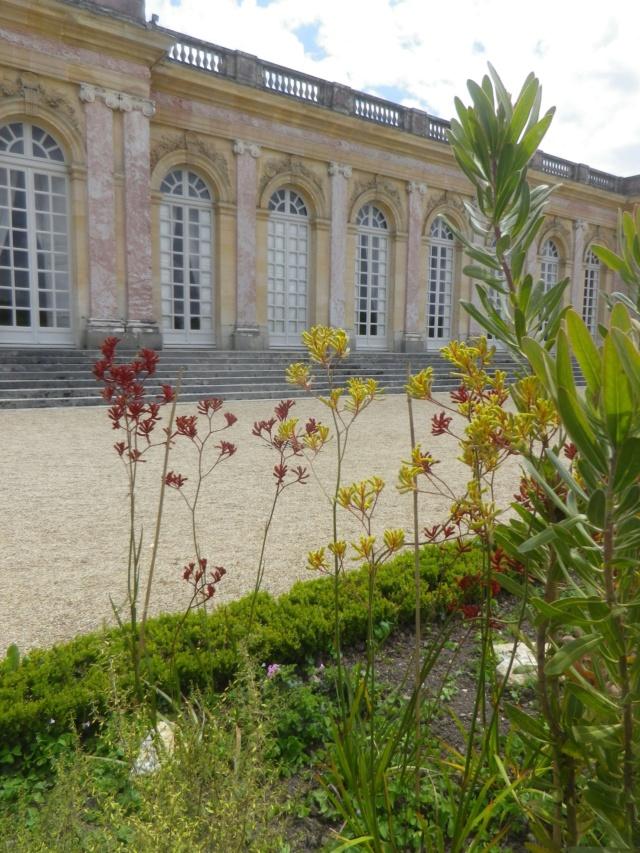 Le Parterre Africain du Grand Trianon Imgp1900