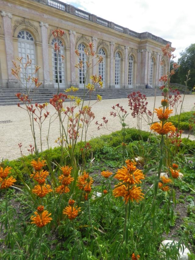Le Parterre Africain du Grand Trianon Imgp1901