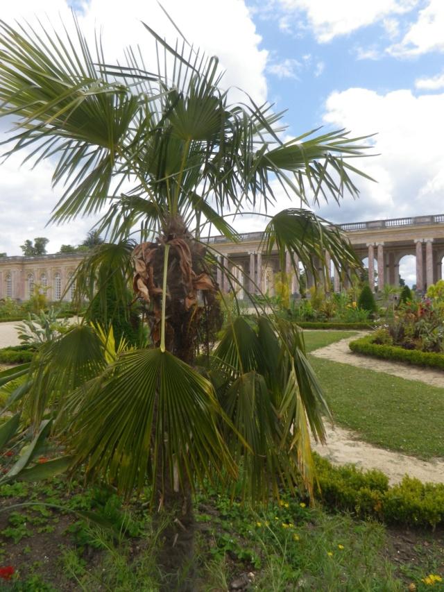 Le Parterre Africain du Grand Trianon Imgp1902