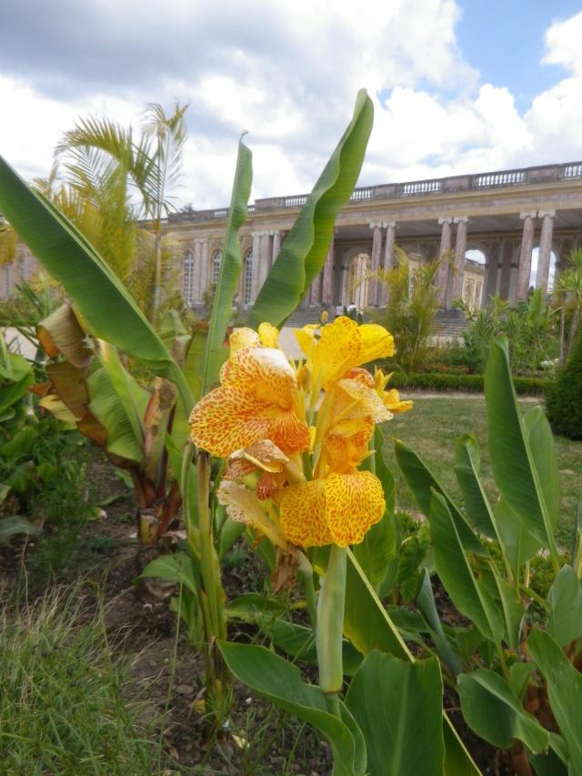 Le Parterre Africain du Grand Trianon Imgp1904