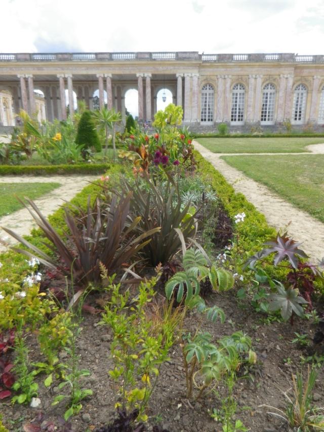 Le Parterre Africain du Grand Trianon Imgp1906