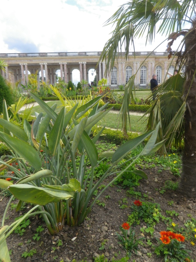 Le Parterre Africain du Grand Trianon Imgp1908