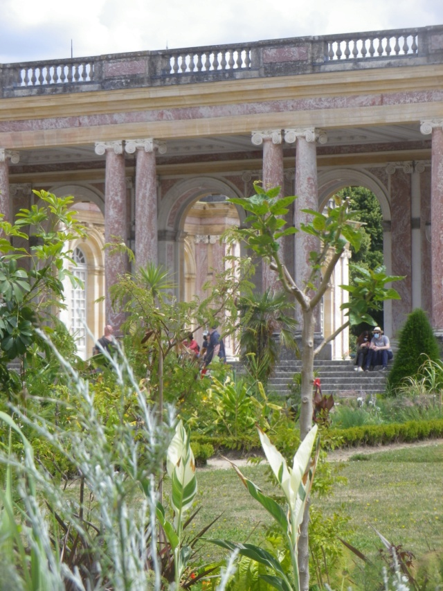 Le Parterre Africain du Grand Trianon Imgp1909