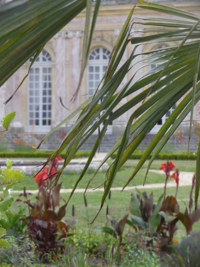 Le Parterre Africain du Grand Trianon Imgp1911