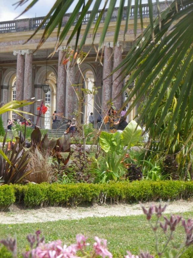 Le Parterre Africain du Grand Trianon Imgp1912