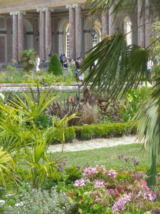 Le Parterre Africain du Grand Trianon Imgp1913