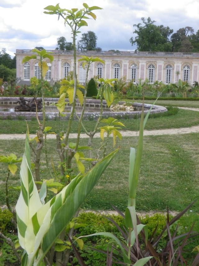 Le Parterre Africain du Grand Trianon Imgp1921