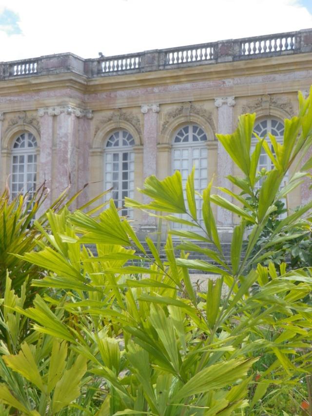 Le Parterre Africain du Grand Trianon Imgp1922