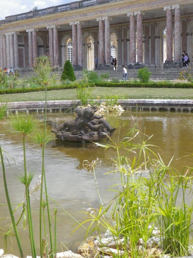 Le Parterre Africain du Grand Trianon Imgp1926
