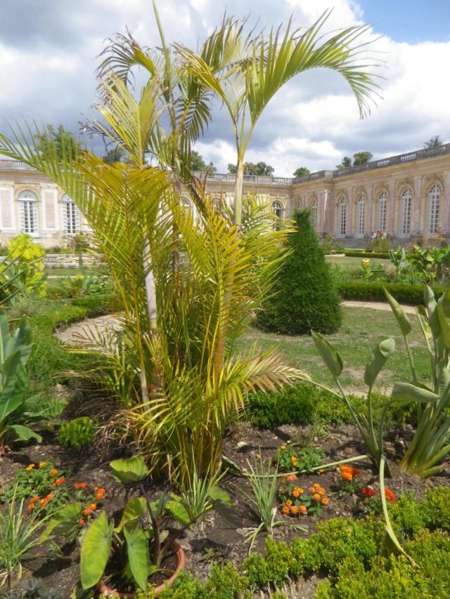 Le Parterre Africain du Grand Trianon Imgp1931