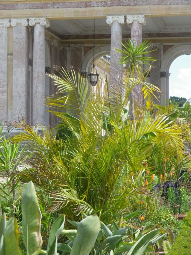 Le Parterre Africain du Grand Trianon Imgp1932