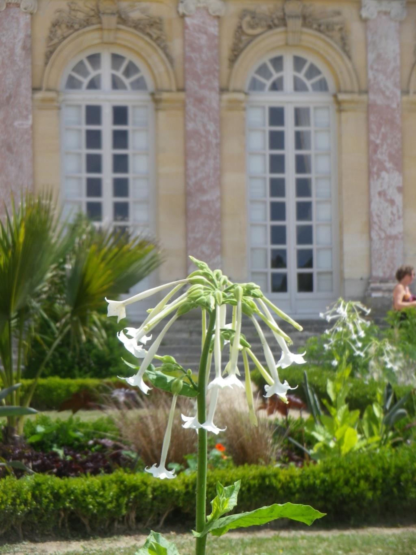 Le Parterre Africain du Grand Trianon Imgp1946