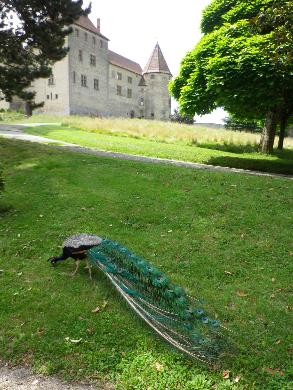 A 30 km au sud de Lyon,  le château de Septème Imgp2655