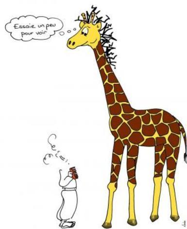 ZARAFA - La girafe de Charles X, dite Zarafa Pmybdt10