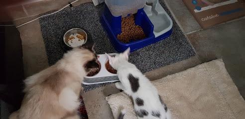 caramel chatonne grise et blanche mai 2018 20180910