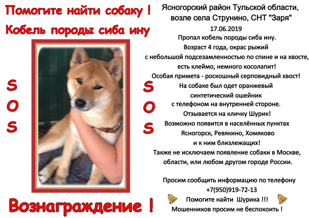 Пропал кобель сиба в Тульской области, возможно вывезен в Москву! Oaa_2011