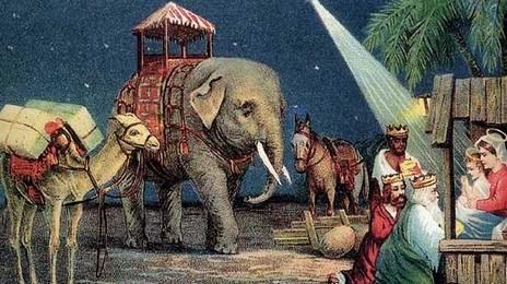 LA CHRYSALIDE DE COCCINELLE - Portail Elepha12