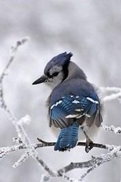 LA CHRYSALIDE DE COCCINELLE - Portail Oiseau18
